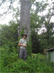 Species: Pecan Owner: Elizabeth Baker Address: 2917 23rd St N.