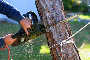 man cutting into tree with chainsaw