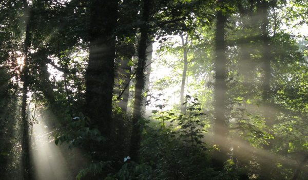 Sunlight streaming through forest.