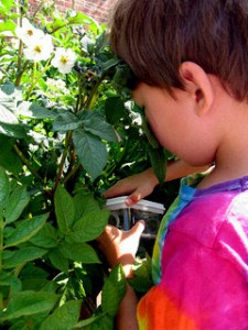 Boy in vegetable garden.