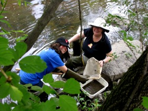 Volunteer stream monitors wade into an Arlington stream.