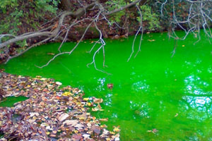 Bright fluorescent green stream pollution.