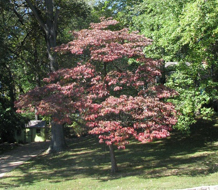 recommended trees, Natural flower