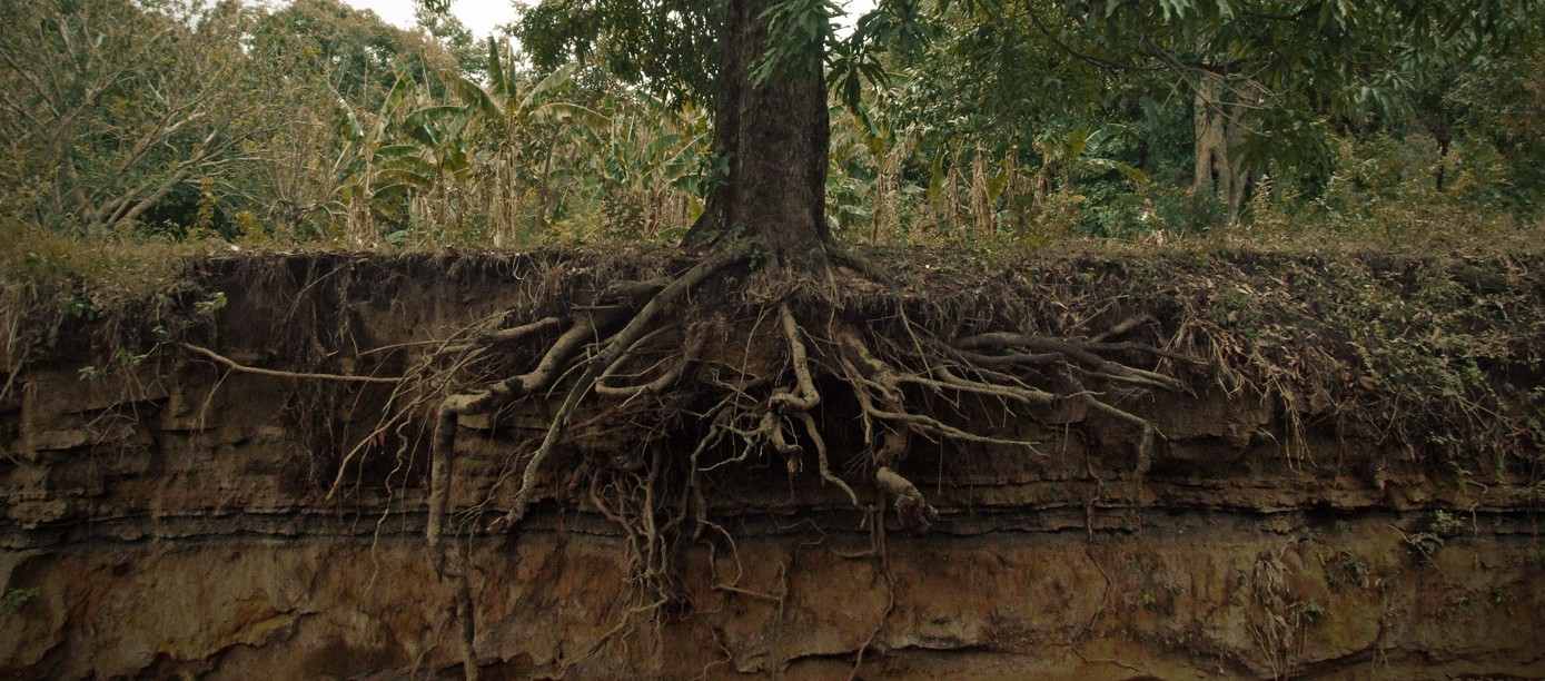 how to get roots out of the ground
