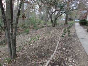 """""""After"""" image of slope that was terraced with staked tree limbs and planted with natives through the StormwaterWise Landscapes Program."""