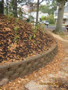 """""""After"""" photo of a StormwaterWise conservation landscape on a slope."""