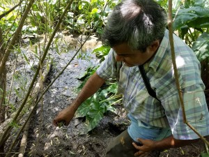 Alonso Abugattas collecting local plant material