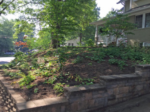 Conservation Landscaping - After