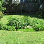 Rain Garden - After