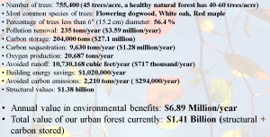 Environmental Benefits of Arlington trees