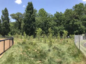 Bluemont Forest Buffer
