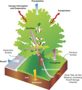 Stormwater Benefits of Trees