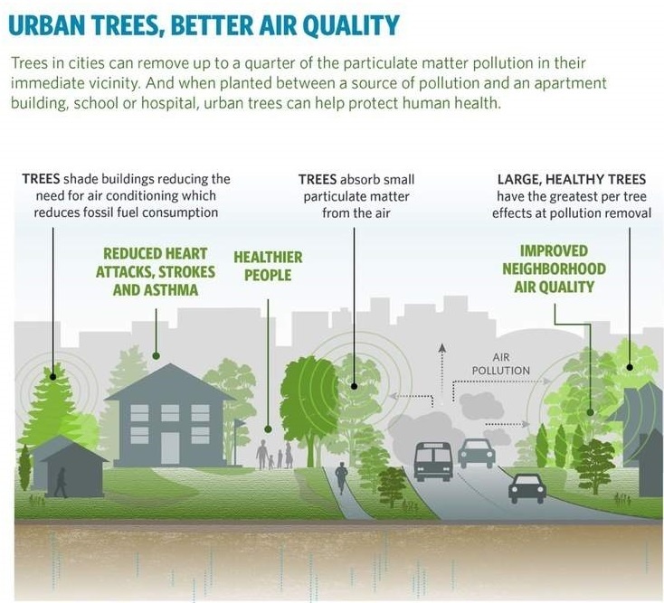 Trees Improve Air Quality (Source: Nature Conservancy)