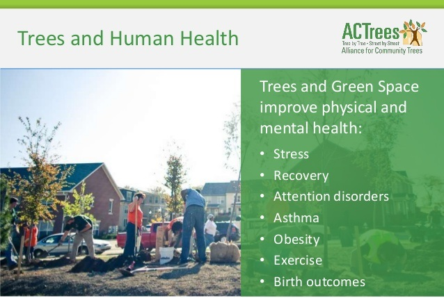 Trees and health (Source: ACTrees)