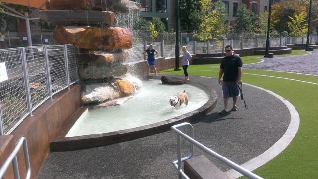 James Hunter Dog Park