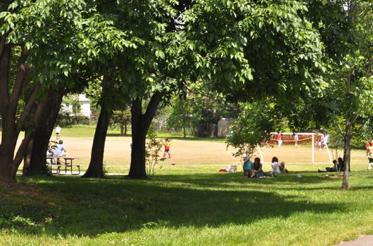 fields park arlington county trees picnic