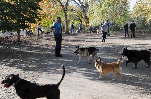 Off Leash Dog Park Arlington