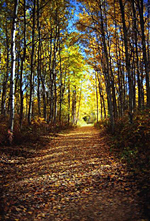 9509Hiking Trail in the Fall