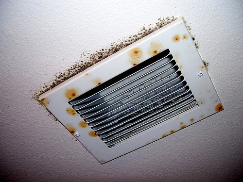mold on air vent