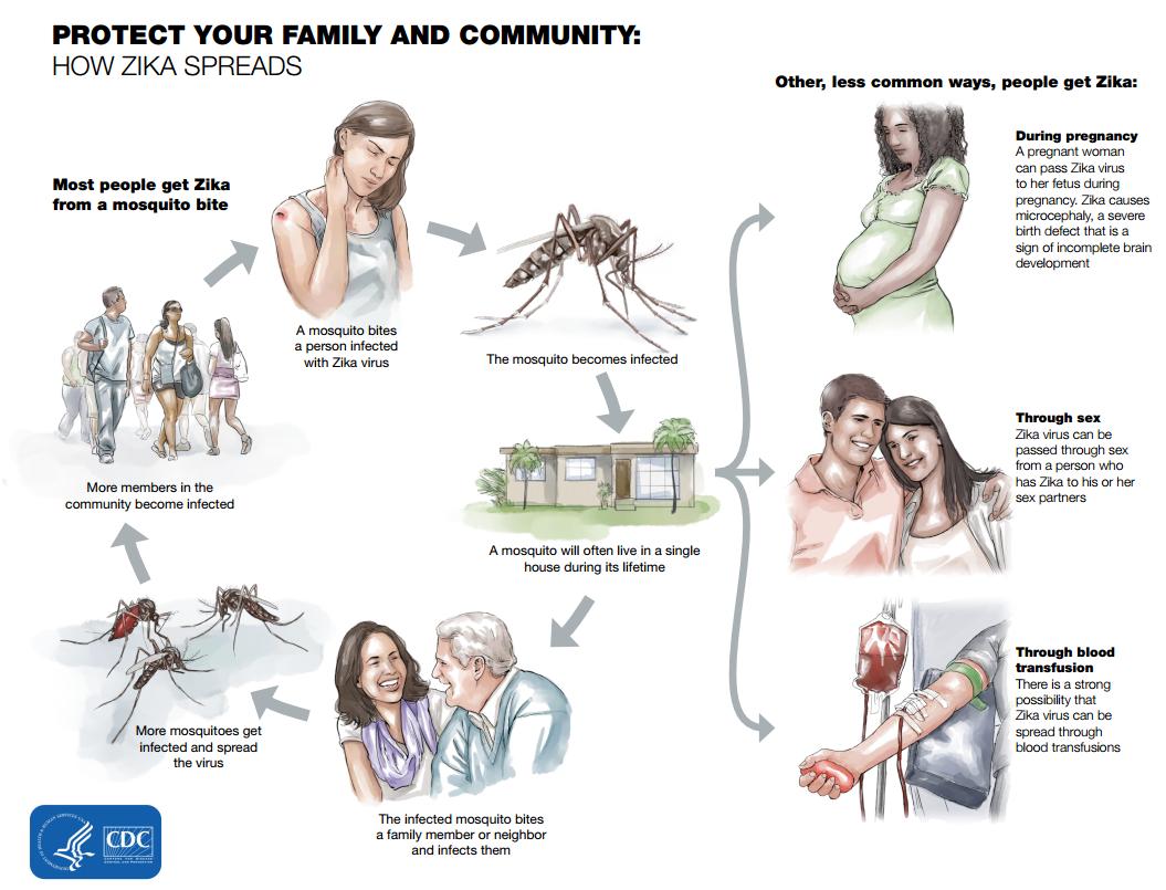 Cdc Sexual Transmission Zika