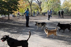shirlingtondogpark