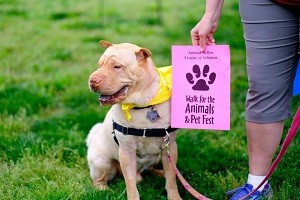 walk4animals_best