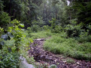 Donaldson Run Tributary A after stream restoration.