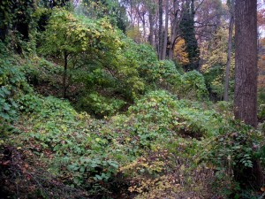 Invasive plants along Donaldson Run Tributary B.