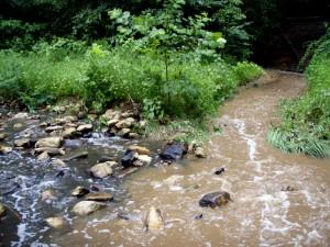 Comparison of sediment from erosion in restored and unrestored branch of Donaldson Run.