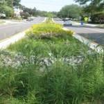 Bio-retention median on Dominion Hills