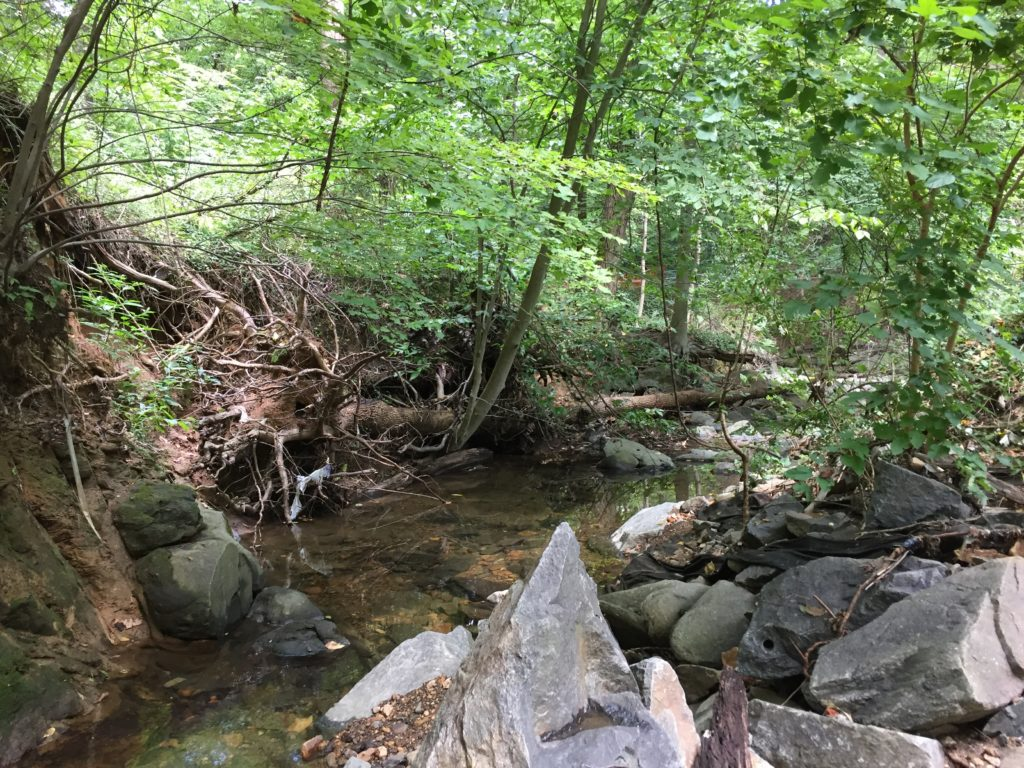 Windy run stream before restoration showing erosion and downed trees