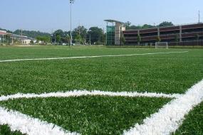 Williamsburg field
