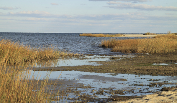 Chesapeake Bay Marsh