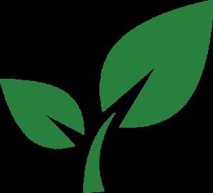 green organic leaf